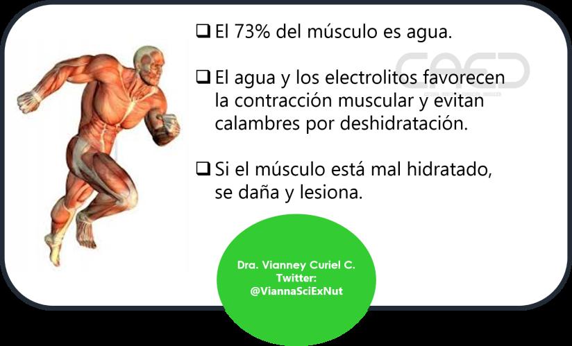 Agua y musc-VCC